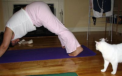 cat-watching-yoga-pose.jpg
